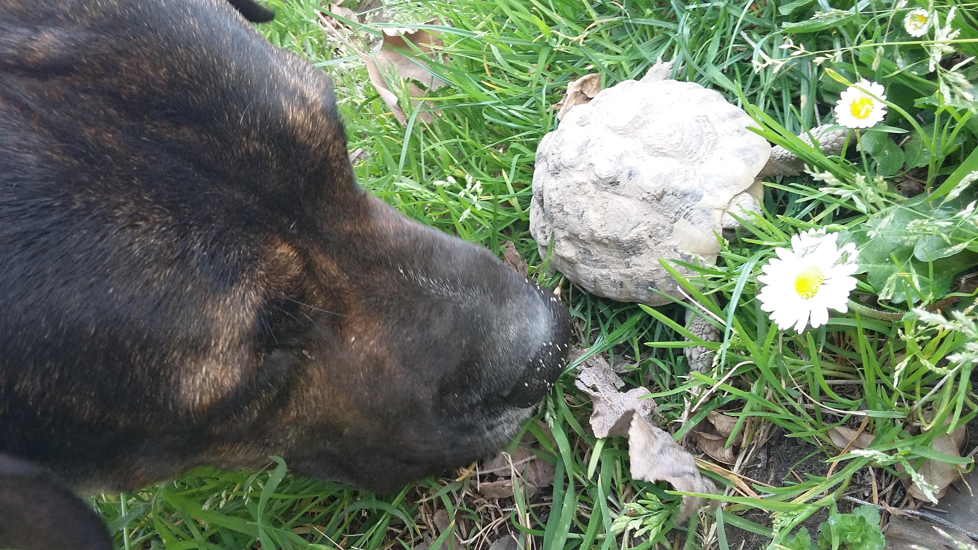 Tartarughe di terra lista delle cose da fare muccapazza for Terra per tartarughe di terra