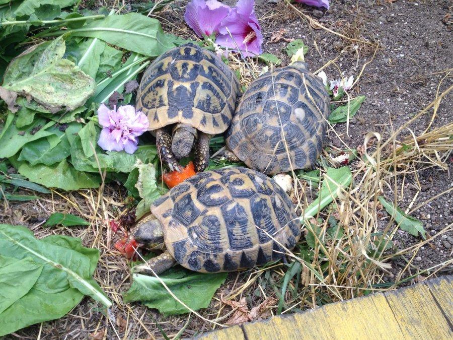 tartarughe di terra lista delle cose da fare muccapazza
