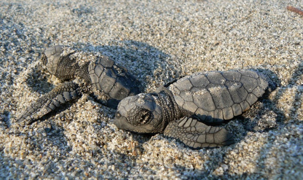 tartarughe marine lista di cose da fare nella vita