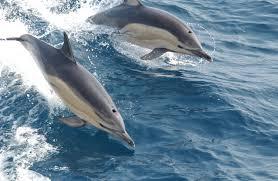 Nuotare coi delfini lista di cose da fare muccapazza - Bagno coi delfini roma ...