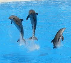 Nuotare coi delfini - Lista di cose da fare   MuccaPazza