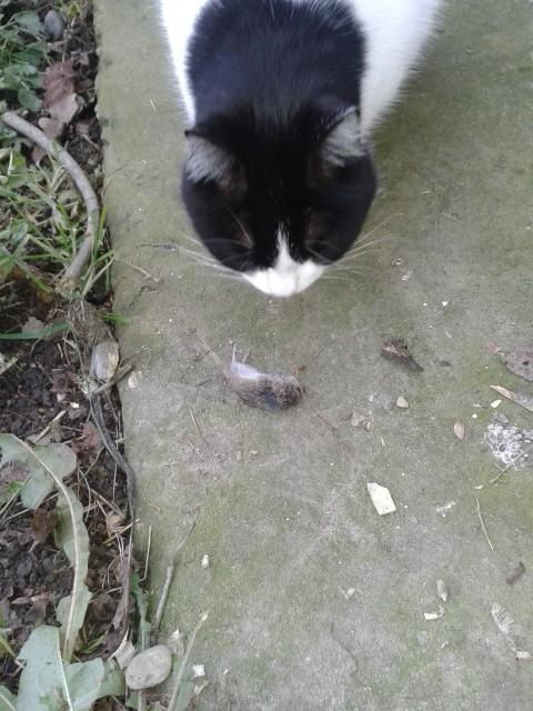 Allontanare i topi senza ucciderli muccapazza - Allontanare i gatti dal giardino ...