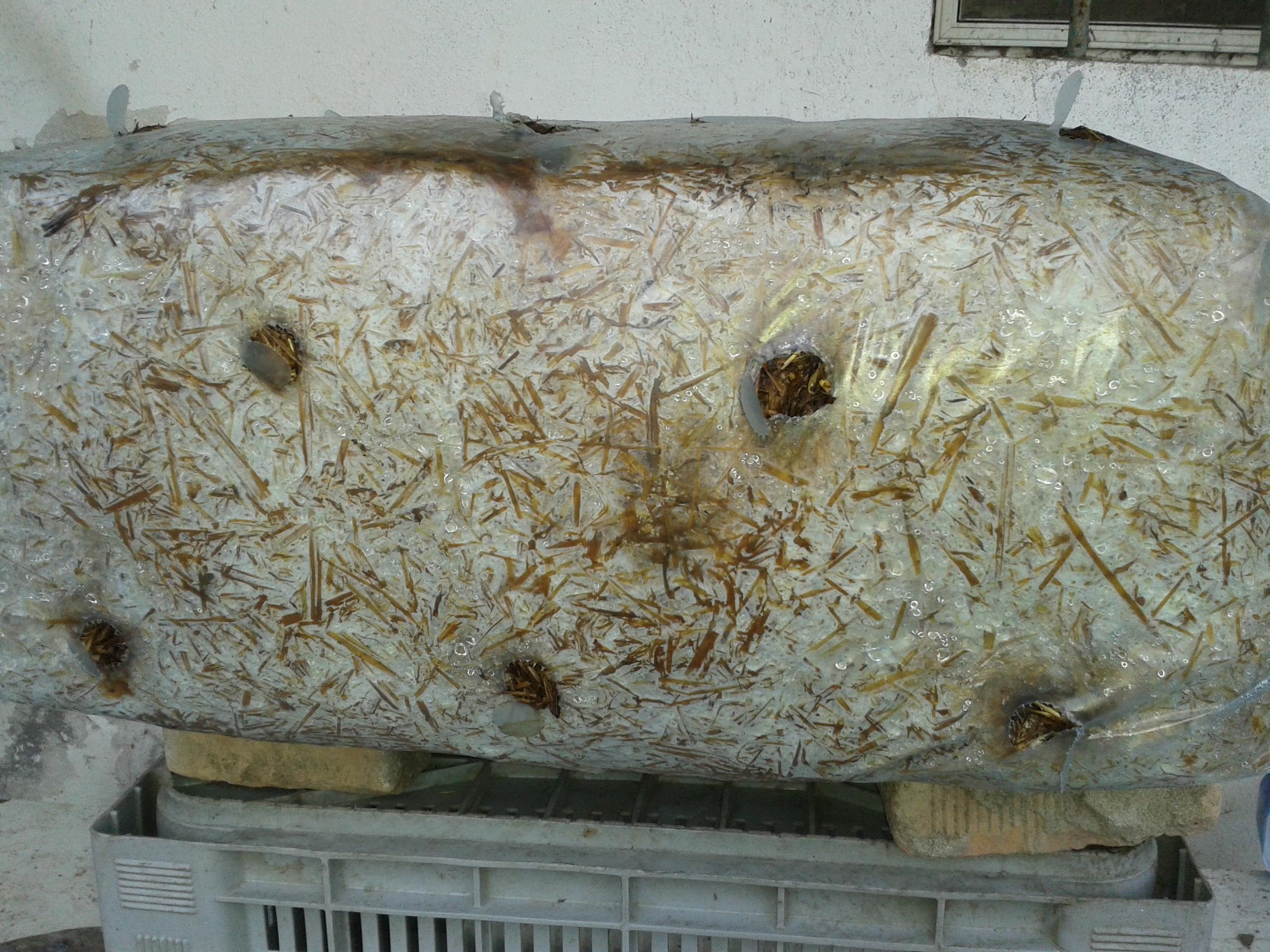 Coltivare i funghi a casa muccapazza for Piani di casa di balla di fieno